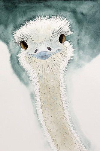 De blije struisvogel