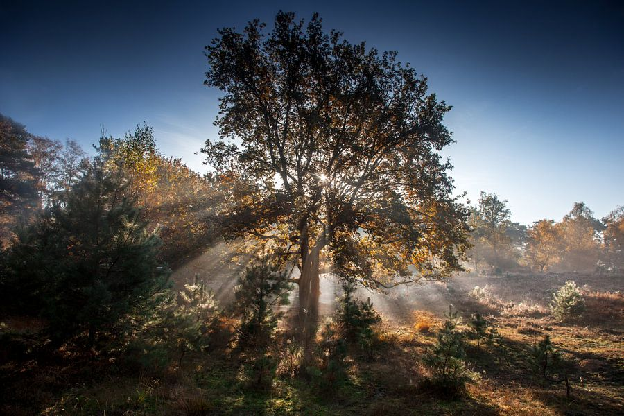 Autumn light van Ruud Peters