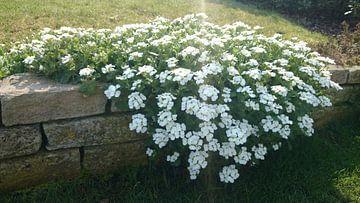 Bloemen op de muur von Fleur Ruygh