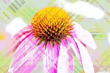 Echinacea abstrakt von Rosi Lorz