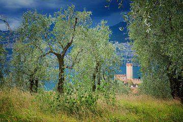 oude bomen in de olijfgaard boven Malcesine, onweersatmosfeer van Susanne Bauernfeind
