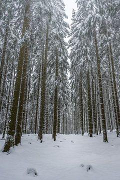 Winterwald von Jens Sessler