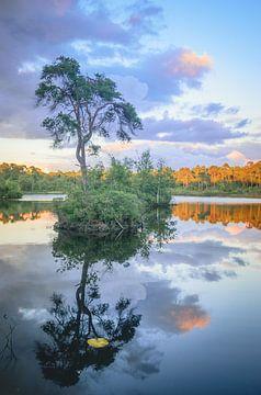 Kleuren van de natuur van Miranda Rijnen Fotografie