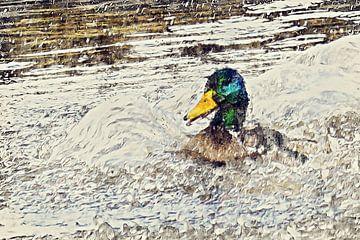 Éclaboussure mâle canard sur Art by Jeronimo