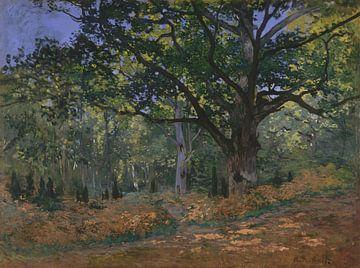 Le chêne Bodmer, la forêt de Fontainebleau, Claude Monet sur