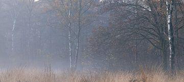Mist in de Leyen - Pano in herfstkleuren van P Leydekkers - van Impelen