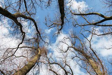 bomen en water en lucht bij het groote wiel bij empel