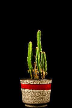 Jahrgangs-Kaktus von Nathalie Pol