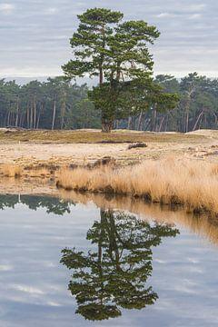 Reflectie van een boom van zeilstrafotografie.nl