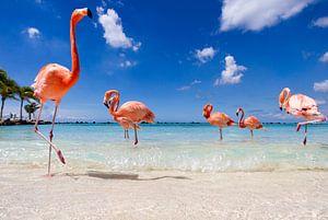 Flamingo's up close and personal  van