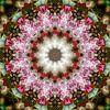 Pink Prunus van Frans Blok thumbnail