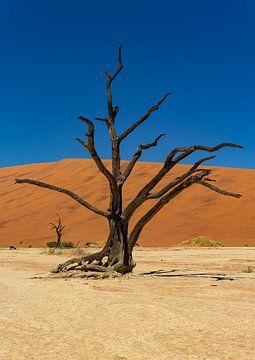 Sossusvlei Namibië (12) van Adelheid Smitt
