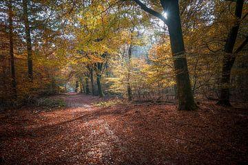 Herbstlicht von Roelof Nijholt