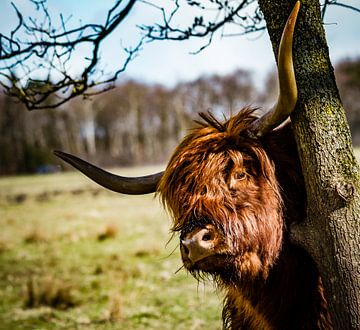 Bonjour, Highlander. sur Meint Brookman