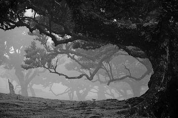 Betoverd - mistig bos van BHotography