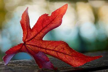 Herbstzeitschrift von Willian Goedhart