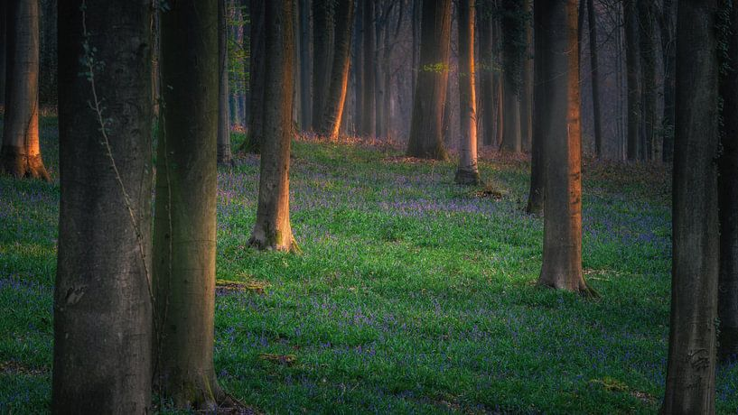 Spring is coming van Wim van D