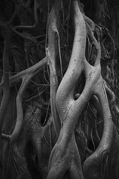 racines des arbres sur