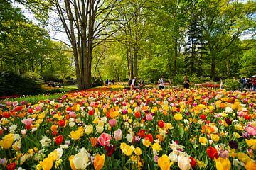 Tulpen aus Holland. von Brian Morgan