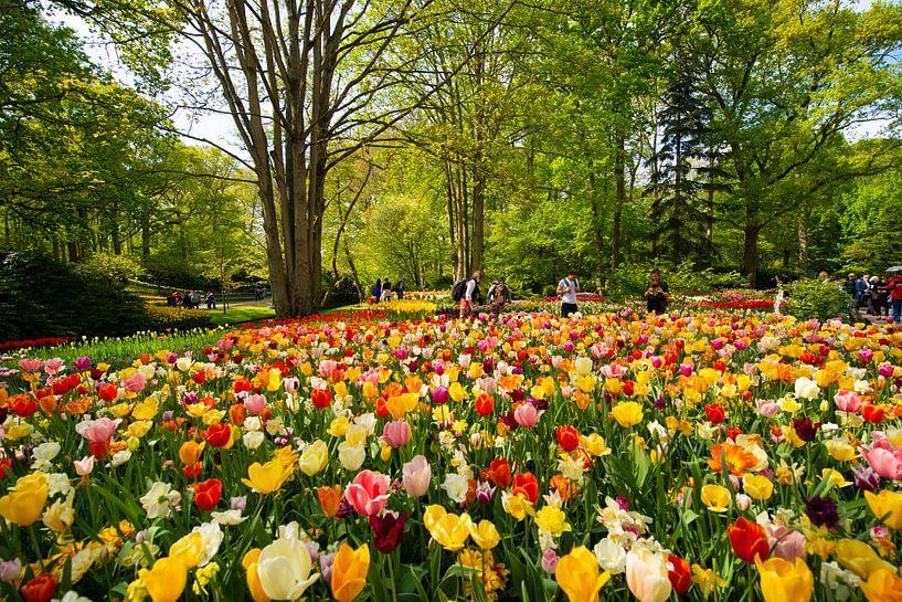 Tulips from Holland. van Brian Morgan