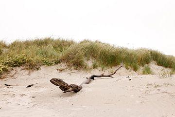 Dunes sur l'île néerlandaise des Wadden d'Ameland, près de Hollum. sur Ans van Heck