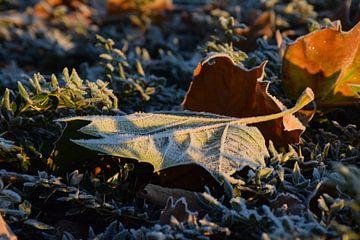 Blad met ijs in de vroege ochtend van Rebecca Dingemanse