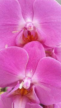 orchidee #5 van Lucas Joël Smeenge