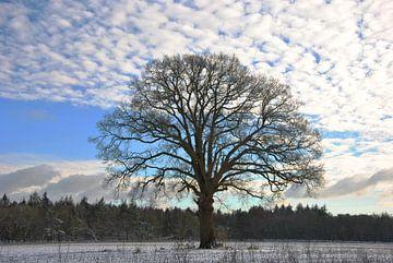 Solo boom in winters landschap van M de Vos