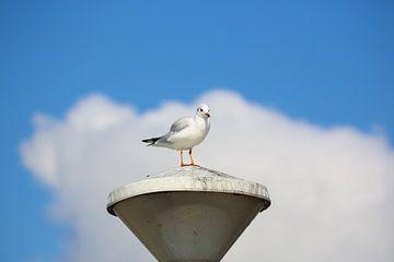 Meeuw op een lantaarnpaal van Fotografie Jeronimo