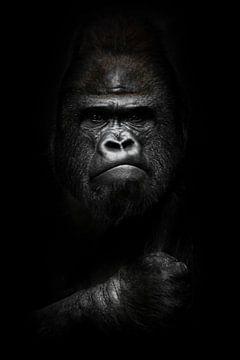 Gesicht und mächtige Hand in der Dunkelheit. Porträt eines mächtigen dominanten männlichen Gorillas  von Michael Semenov