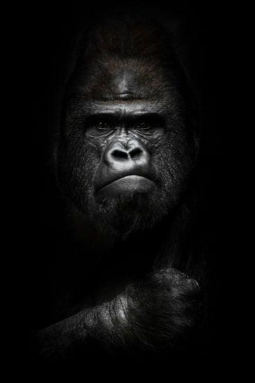 gezicht en krachtige hand in het donker. Portret van een krachtige dominante mannelijke gorilla (fys