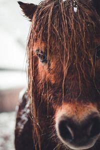 Braunes Pferd im Winter