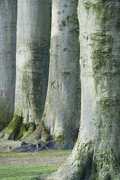 Bomen / boom en boomstam met letters KH en mos in het groen  van Aart Hoeven / Dutch Image Hunter