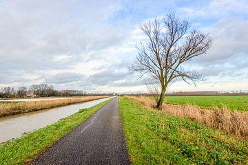 Eenzame boom in de berm van een lange landweg van Ruud Morijn