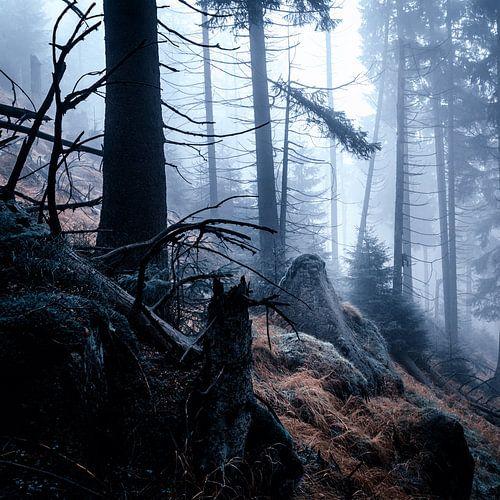 Nebelwald 007 van Oliver Henze