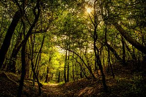 Waldlandschaft mit Morgensonne von Marjolein van Middelkoop