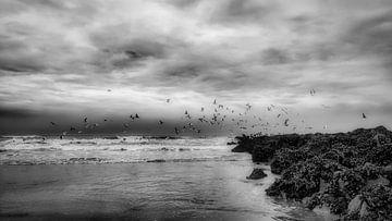 Möwen über dem Meer von Rik Verslype