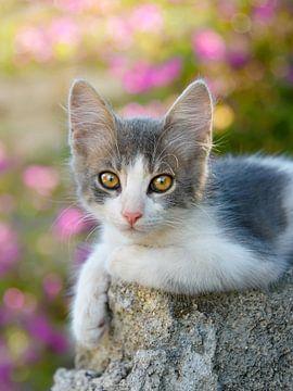 Süßes junges zweifarbiges Katzenbaby von Katho Menden