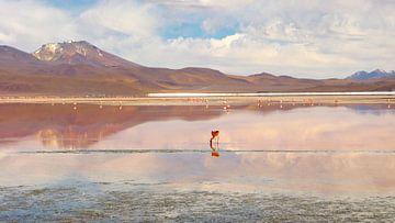 'Flamingo', Bolivia van Martine Joanne