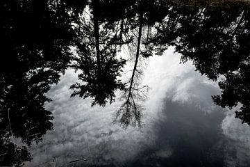Poel en bomen in de Herpse Bossen van Wouter Bos