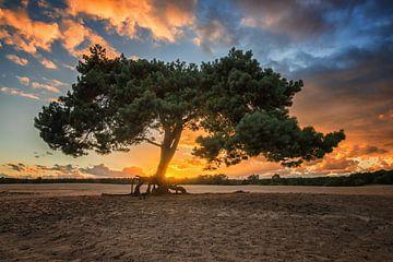 alter Baum goldene Stunde von Robin van Maanen