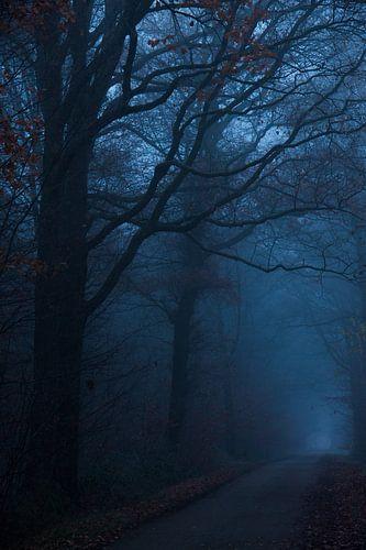 Donkere weg van Pieter Navis