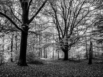 Grote bomen in bos van Charlotte Dirkse