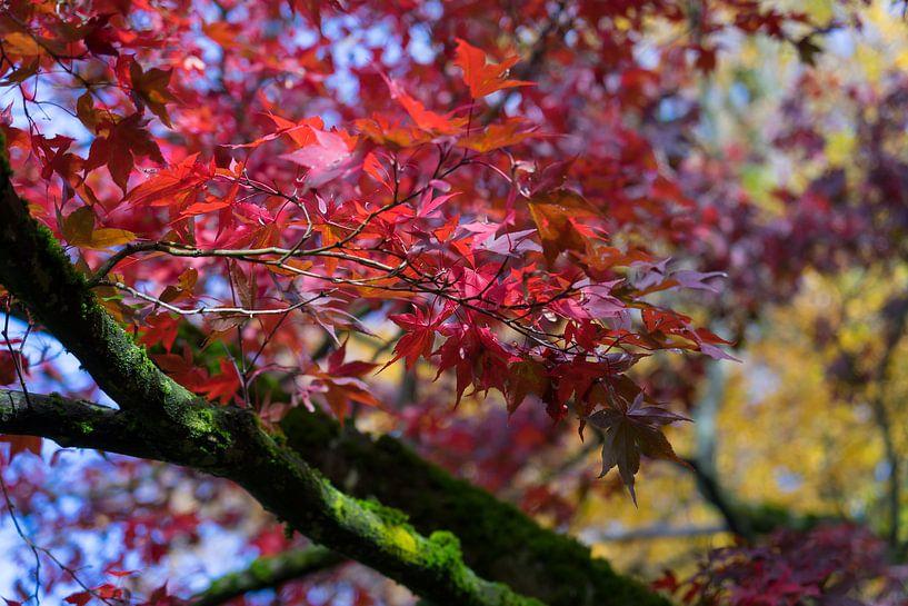 Rote Blätter von Adriana Mueller