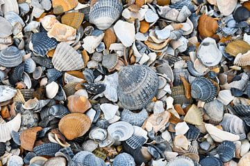 Muscheln am Strand von bart hartman