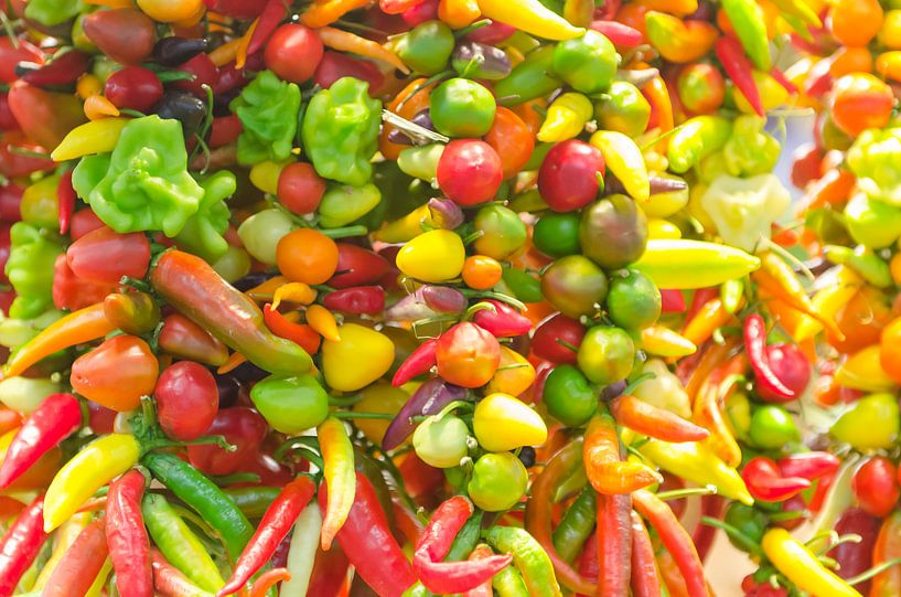 Kleurrijke pepers van Mark Bolijn