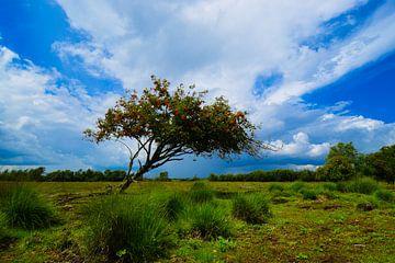 Scheve boom in het natuurgebied Bargerveen. sur Lisanne Bosch