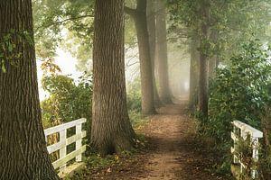 Pad in de Mist