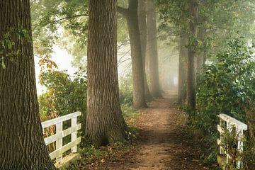 Pad in de Mist van