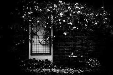 Rozen in de oude tuin van Yana Spiridonova